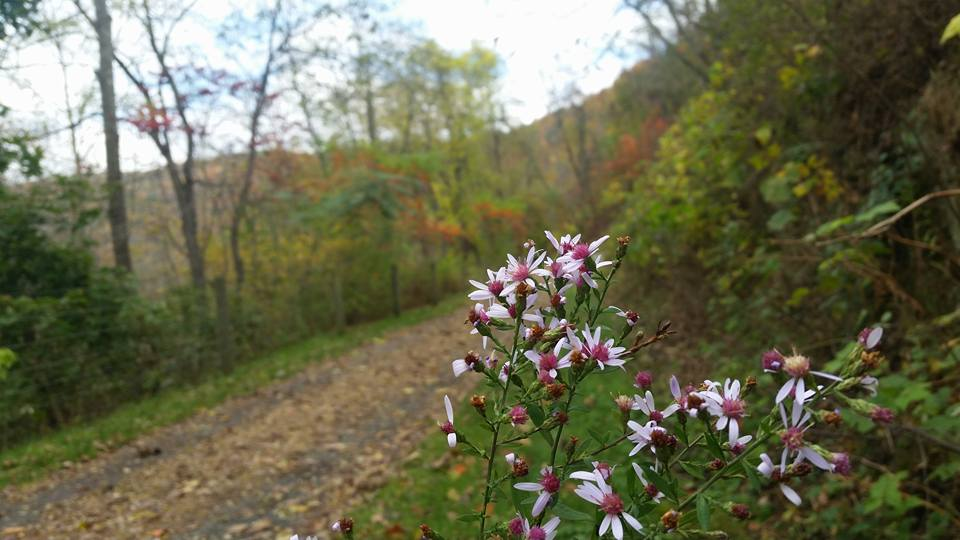 POTF flowers